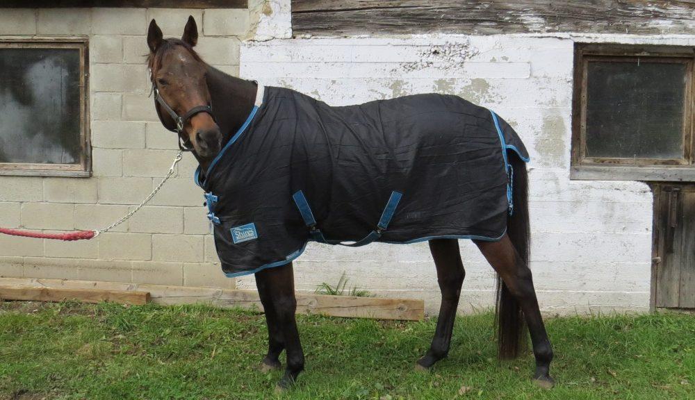 Horse Blanketing post: Larry