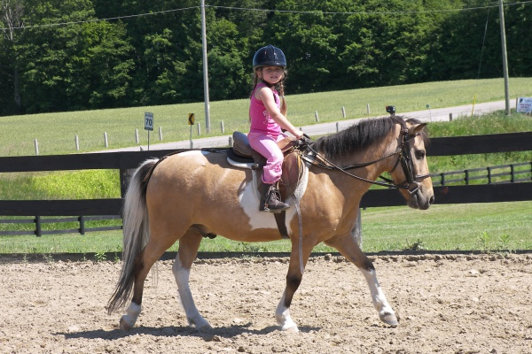 Tips on Horse Ownership