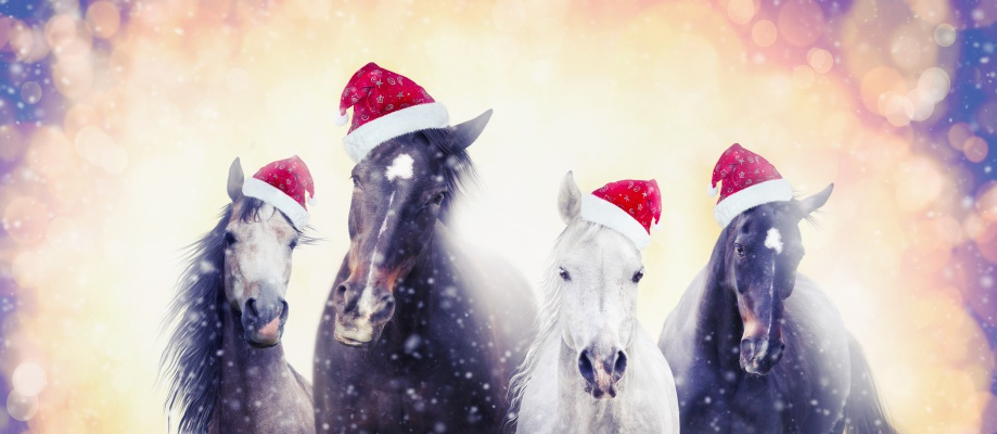 'Twas the night before Christmas:Christmas horses with Santa hat on snow bokeh background, banner for website