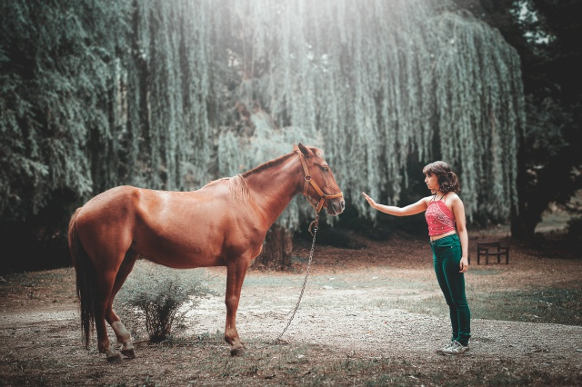 Horse Talk:Photo by Daniel Cano on Unsplash