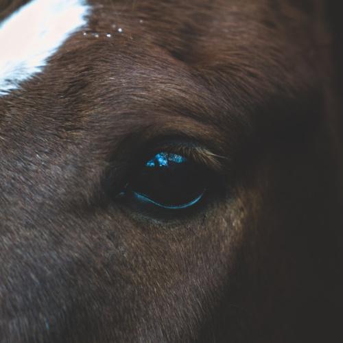 Animal communicator: Photo by Joe Bio on Unsplash