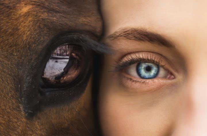 Horse Talk: photo by Seth Macey-396196- on Unsplash