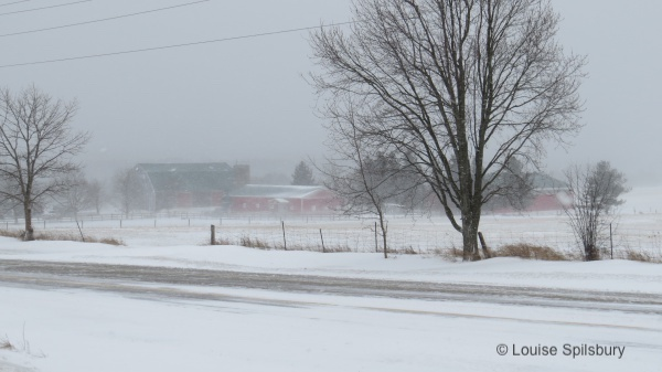 Am I Too Old To Ride?: photo of farm across the road, veiled in blowing snow