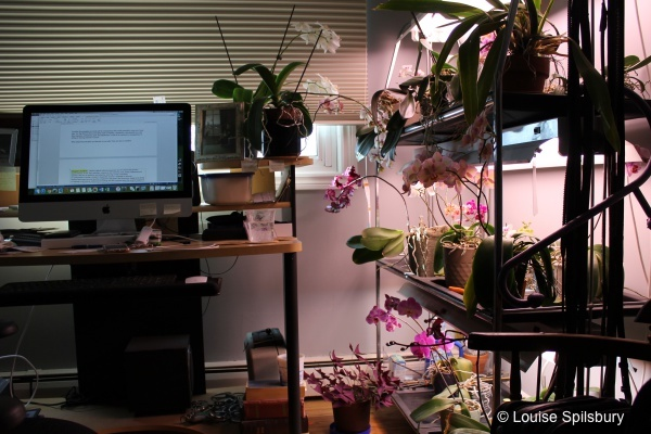 Am I Too Old To Ride?: orchid garden in author's office