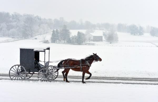 Horse-Human Bond: photo by Randy Fath on Unsplash