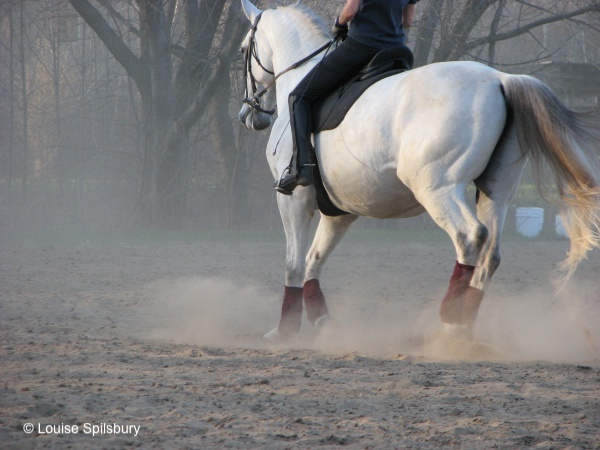 Pretty as Horse Pictures: riding Gandalf