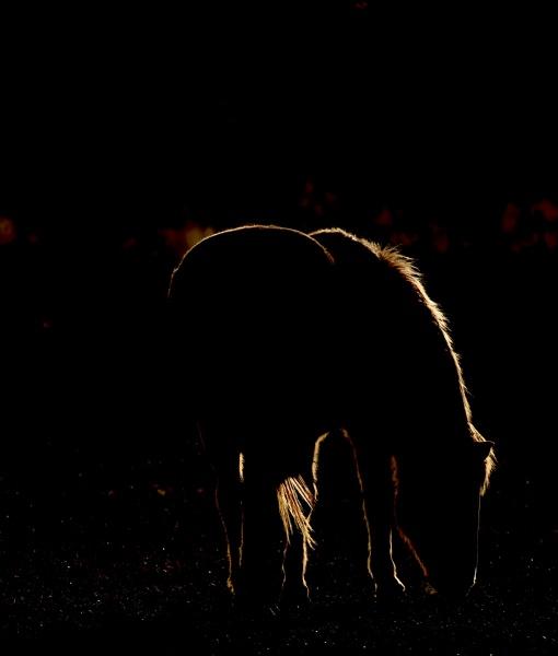 Pretty as Horse Pictures: photo by Duncan Sanchez on Unsplash