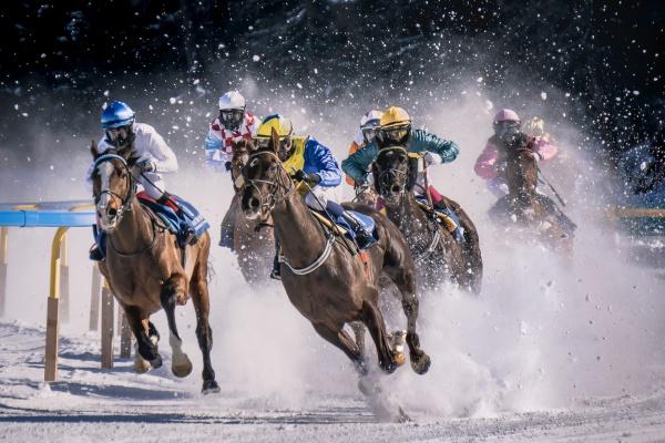 Pretty as a Horse Picture: photo by Pietro Mattia on Unsplash